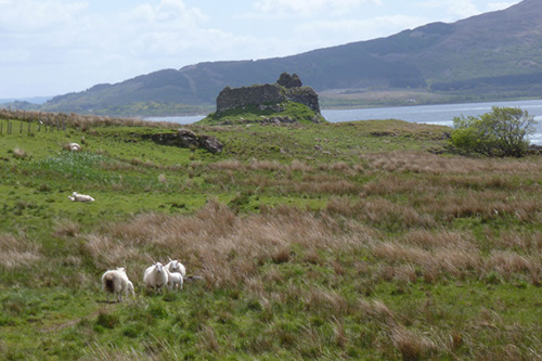 Ardtornish Castle Walk
